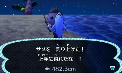 サメ 482.3cm