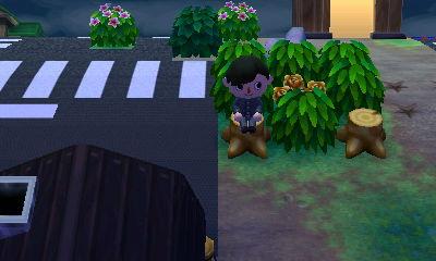 金の薔薇保管用囲いの切り株に座っている