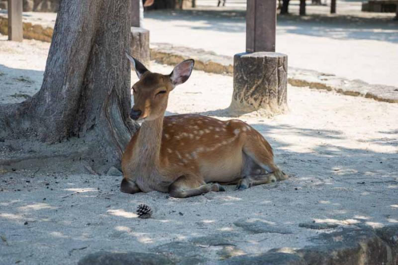 暑すぎて鹿バテ