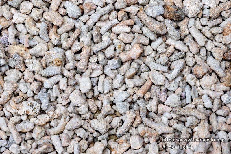 珊瑚の死骸?の砂利
