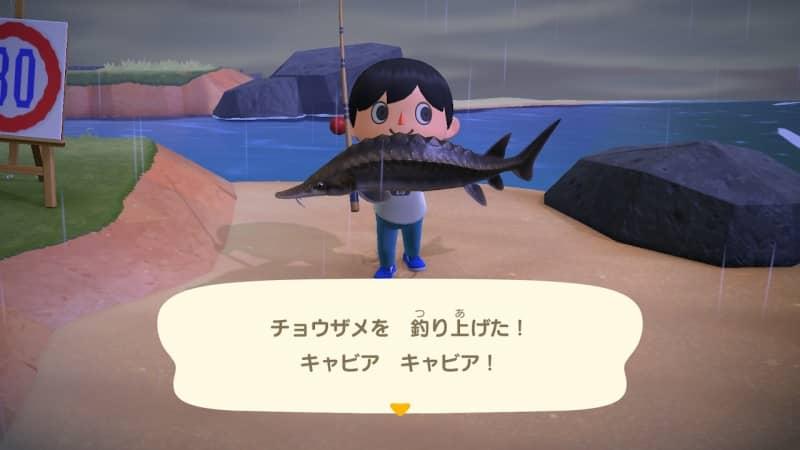 チョウザメを釣り上げた